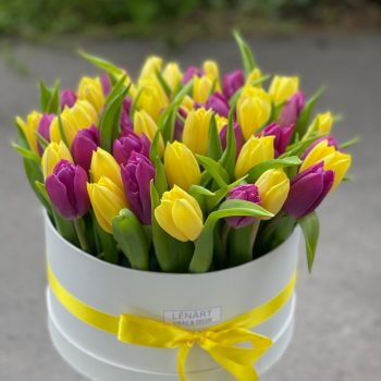 50 szálas tulipán box